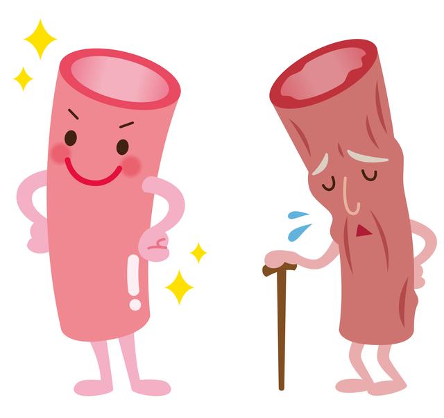健康な血管、病的な血管